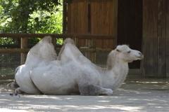 Zoo_Frankfurt_010812_IMG_1006