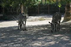 Zoo_Frankfurt_010812_IMG_1020
