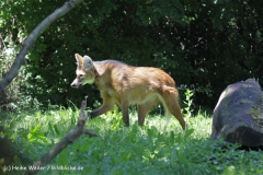 Zoo_Frankfurt_010812_IMG_1032
