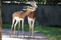Zoo_Frankfurt_010812_IMG_1039-2