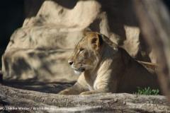 Zoo-Halle-190909-IMG_4599