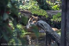 Zoo-Halle-190909-IMG_4628