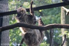 Zoo-Halle-190909-IMG_4670