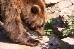 Zoo-Halle-190909-IMG_4733