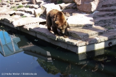Zoo-Halle-190909-IMG_4734
