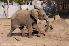 Zoo-Halle-190909-IMG_4770