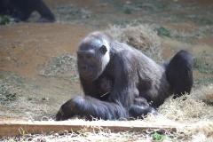 Zoo_Hannover_010416_IMG_0042