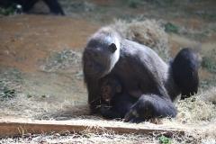 Zoo_Hannover_010416_IMG_0044