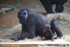 Zoo_Hannover_010416_IMG_0059