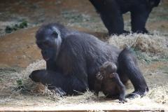 Zoo_Hannover_010416_IMG_0061