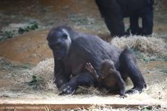Zoo_Hannover_010416_IMG_0063