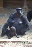 Zoo_Hannover_010416_IMG_0066