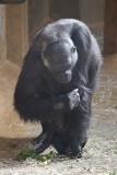 Zoo_Hannover_010416_IMG_0077