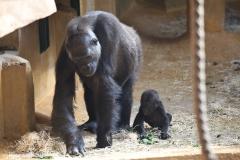 Zoo_Hannover_010416_IMG_0082