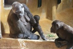 Zoo_Hannover_010416_IMG_0084