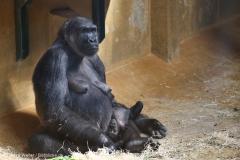 Zoo_Hannover_010416_IMG_0088