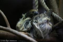 Zoo_Hannover_010416_IMG_0111