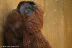 Zoo_Hannover_010416_IMG_0112
