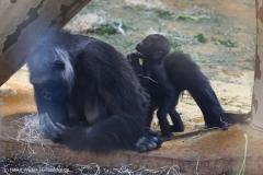 Zoo_Hannover_010416_IMG_0129