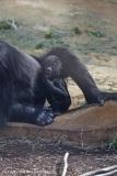 Zoo_Hannover_010416_IMG_0134