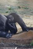 Zoo_Hannover_010416_IMG_0136