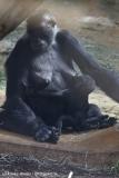 Zoo_Hannover_010416_IMG_0143