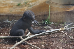 Zoo_Hannover_010416_IMG_0211