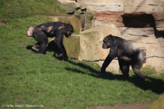 Zoo_Hannover_010416_IMG_0254