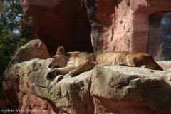 Zoo_Hannover_010416_IMG_0266