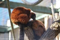 Zoo_Hannover_010416_IMG_0271