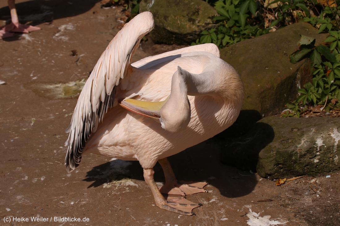 Zoo_Hannover_020916_IMG_7014