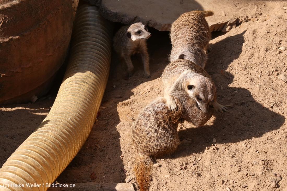 Zoo_Hannover_020916_IMG_7065