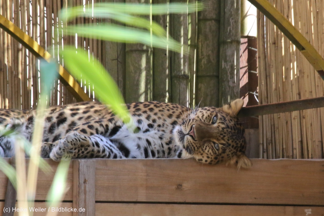 Zoo_Hannover_020916_IMG_7150