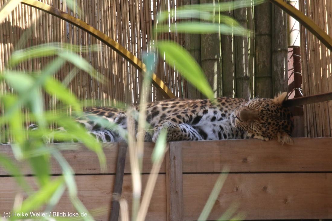 Zoo_Hannover_020916_IMG_7152