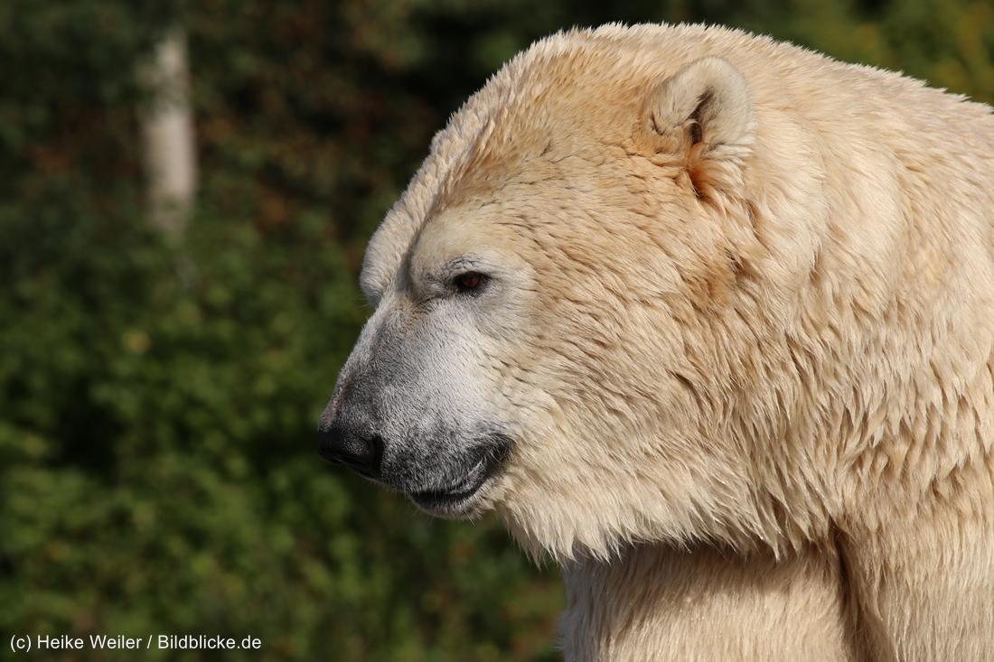 Zoo_Hannover_020916_IMG_7546