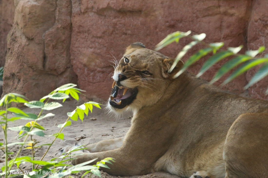 Zoo_Hannover_020916_IMG_7695