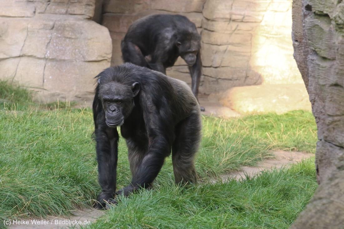 Zoo_Hannover_020916_IMG_7715