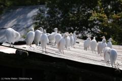 Zoo_Hannover_020916_IMG_6961