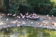 Zoo_Hannover_020916_IMG_6967