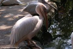 Zoo_Hannover_020916_IMG_6990