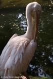 Zoo_Hannover_020916_IMG_6996