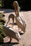 Zoo_Hannover_020916_IMG_7003
