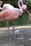 Zoo_Hannover_020916_IMG_7016