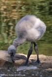 Zoo_Hannover_020916_IMG_7027