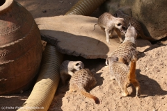 Zoo_Hannover_020916_IMG_7051