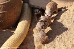 Zoo_Hannover_020916_IMG_7064