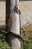 Zoo_Hannover_020916_IMG_7158