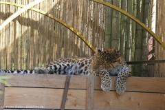 Zoo_Hannover_020916_IMG_7160
