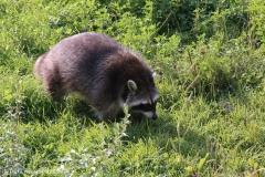 Zoo_Hannover_020916_IMG_7179