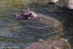 Zoo_Hannover_020916_IMG_7195